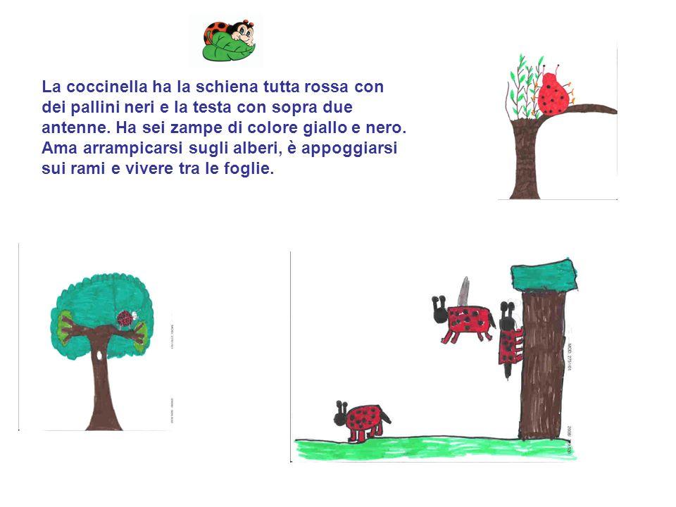 La coccinella ha la schiena tutta rossa con dei pallini neri e la testa con sopra due antenne. Ha sei zampe di colore giallo e nero. Ama arrampicarsi