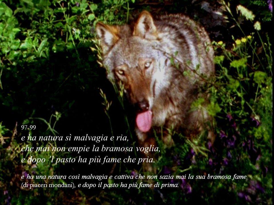 97-99 e ha natura sì malvagia e ria, che mai non empie la bramosa voglia, e dopo l pasto ha più fame che pria. e ha una natura così malvagia e cattiva