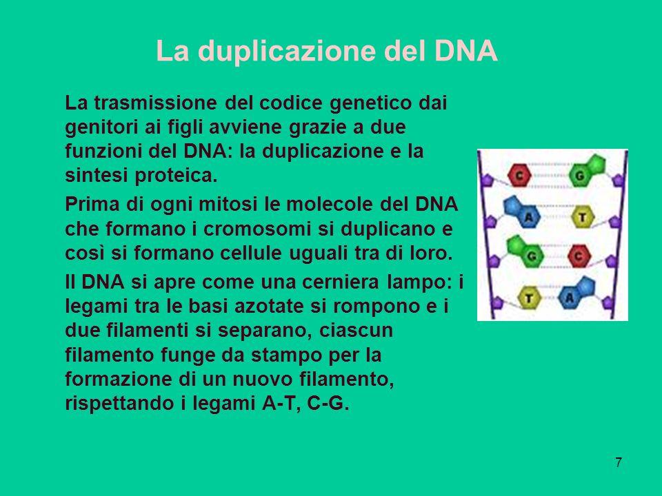 7 La trasmissione del codice genetico dai genitori ai figli avviene grazie a due funzioni del DNA: la duplicazione e la sintesi proteica.