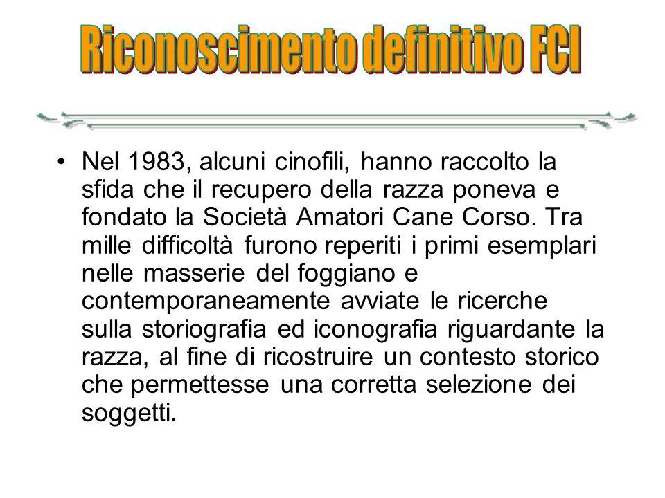 Nel 1983, alcuni cinofili, hanno raccolto la sfida che il recupero della razza poneva e fondato la Società Amatori Cane Corso. Tra mille difficoltà fu