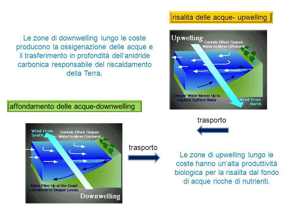 risalita delle acque- upwelling Le zone di upwelling lungo le coste hanno unalta produttività biologica per la risalita dal fondo di acque ricche di n