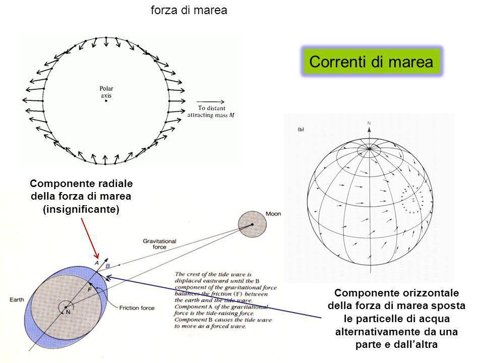Correnti di marea Componente orizzontale della forza di marea sposta le particelle di acqua alternativamente da una parte e dallaltra forza di marea C