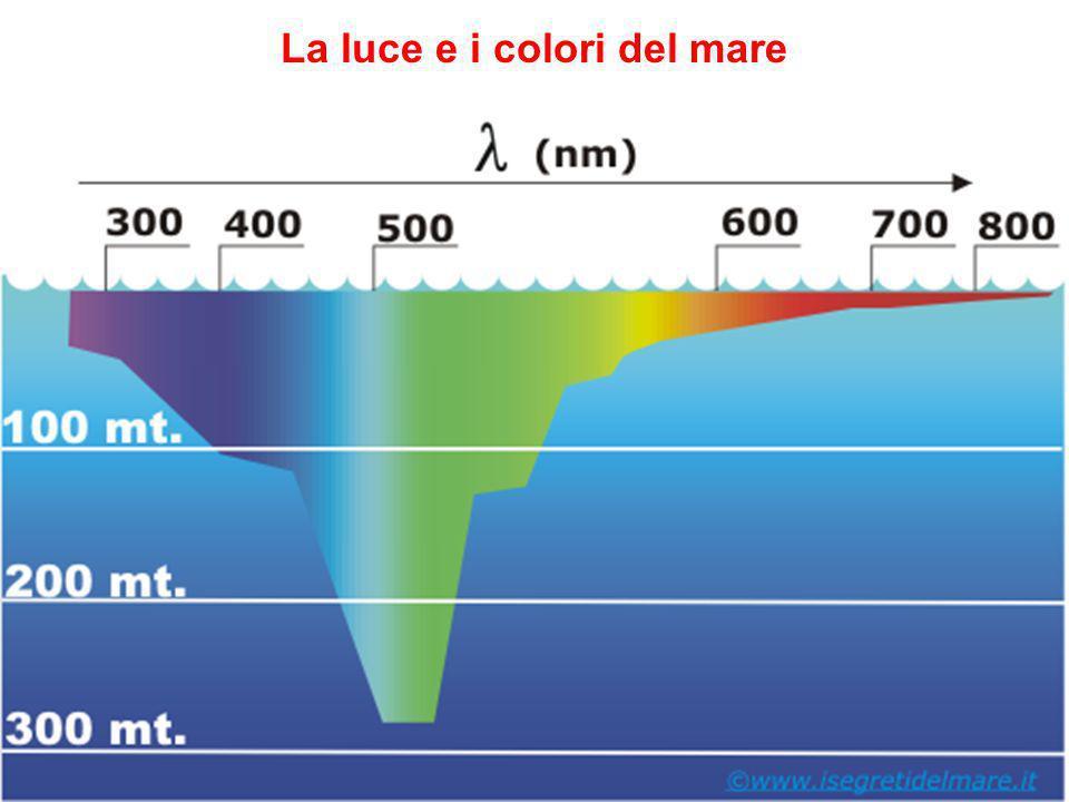 risalita delle acque- upwelling Le zone di upwelling lungo le coste hanno unalta produttività biologica per la risalita dal fondo di acque ricche di nutrienti.