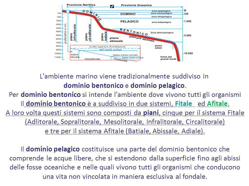 L'ambiente marino viene tradizionalmente suddiviso in dominio bentonico e dominio pelagico. Per dominio bentonico si intende l'ambiente dove vivono tu