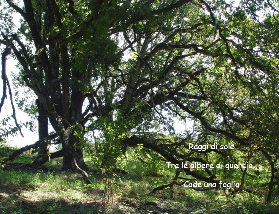 Raggi di sole Tra le albere di quercia - Cade una foglia