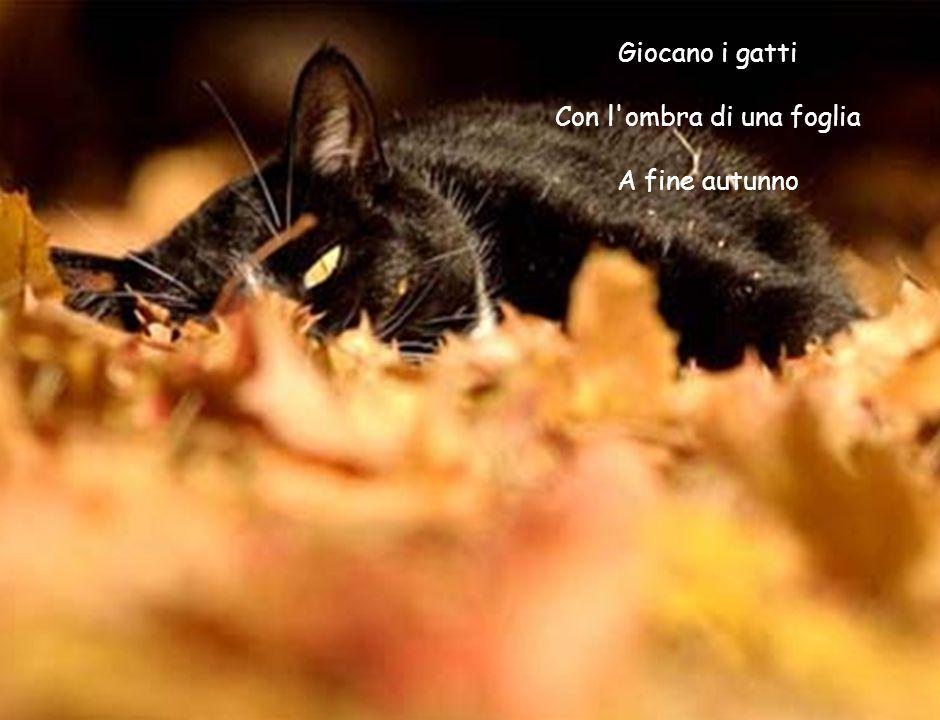 Giocano i gatti Con l'ombra di una foglia A fine autunno