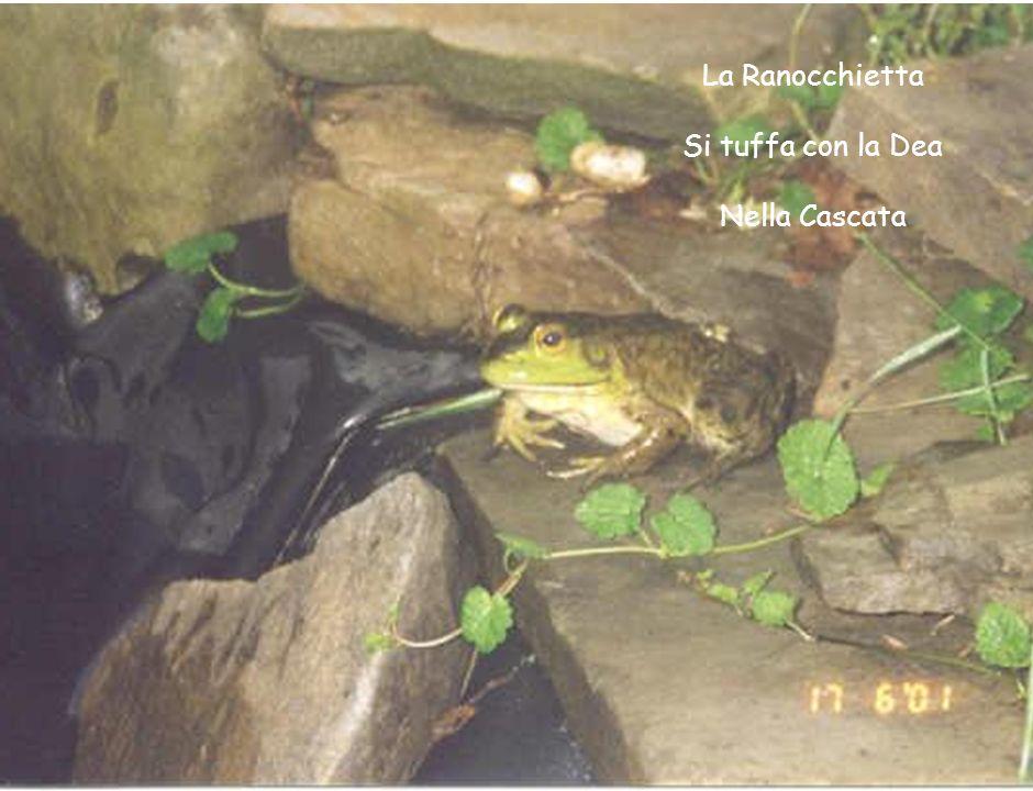 La Ranocchietta Si tuffa con la Dea Nella Cascata