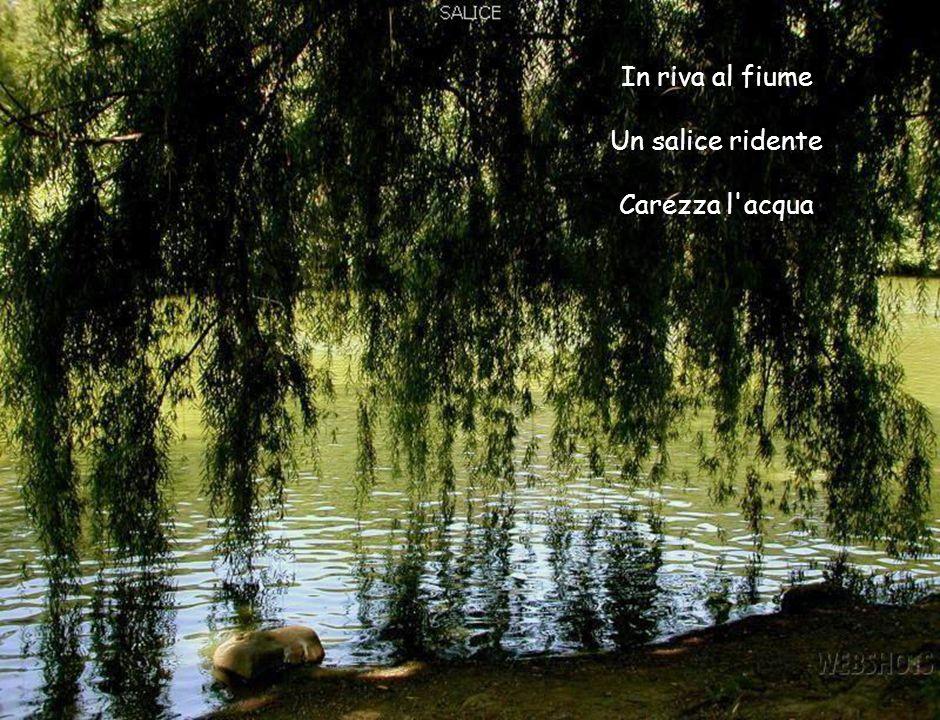 In riva al fiume Un salice ridente Carezza l'acqua