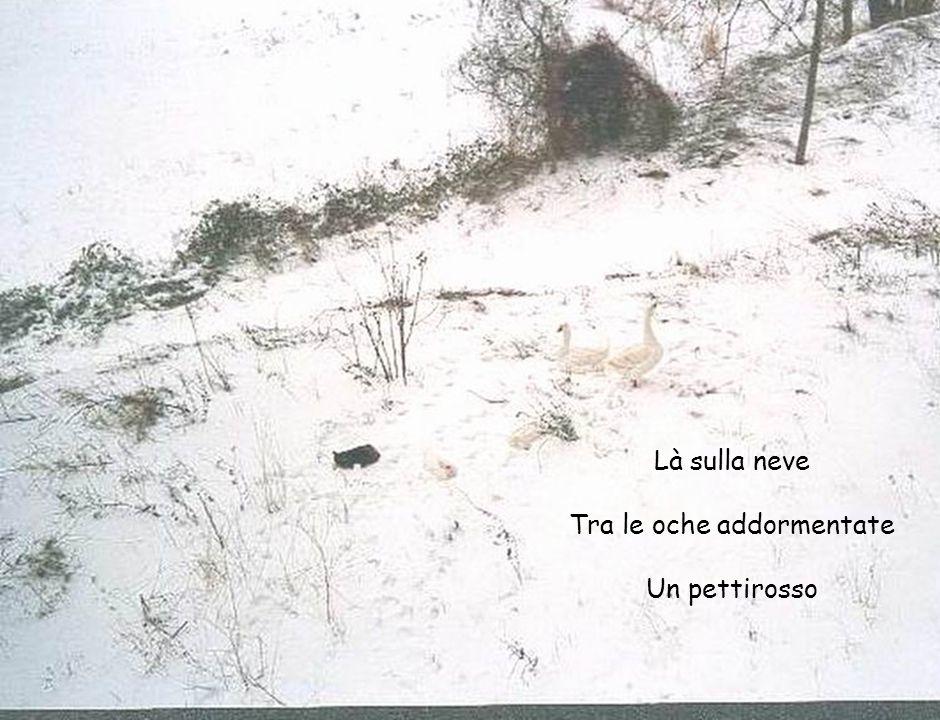 Là sulla neve Tra le oche addormentate Un pettirosso