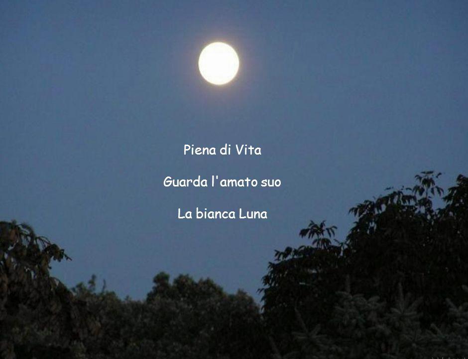 Piena di Vita Guarda l'amato suo La bianca Luna