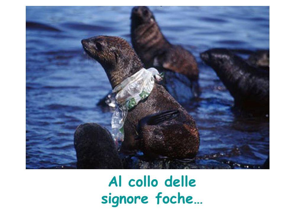 Al collo delle signore foche…