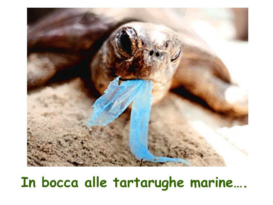 In bocca alle tartarughe marine….