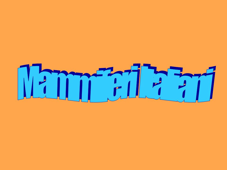 Classificazione dei mammiferi Mammiferi InsettivoriChirotteriLagomorfiRoditoriCarnivoriArtiodattiliCetacei Toporagni Riccio Talpa …molti altri PipistrelliConiglio Lepre comune Lepre variabile Arvicole Ratto Topi Ghiro Marmotta Scoiattolo Istrice Donnola Ermellino Faina Lontra Puzzola Tasso Lupo Volpe Lince Orso Camoscio Muflone Stambecc o Cinghiale Capriolo Cervo Daino Delfino Orca Tursiope Balenottera Capodoglio …altri