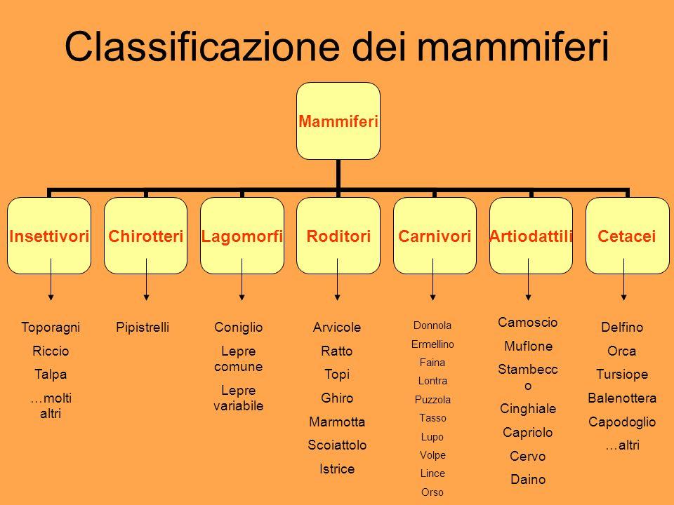 Classificazione dei mammiferi Mammiferi InsettivoriChirotteriLagomorfiRoditoriCarnivoriArtiodattiliCetacei Toporagni Riccio Talpa …molti altri Pipistr