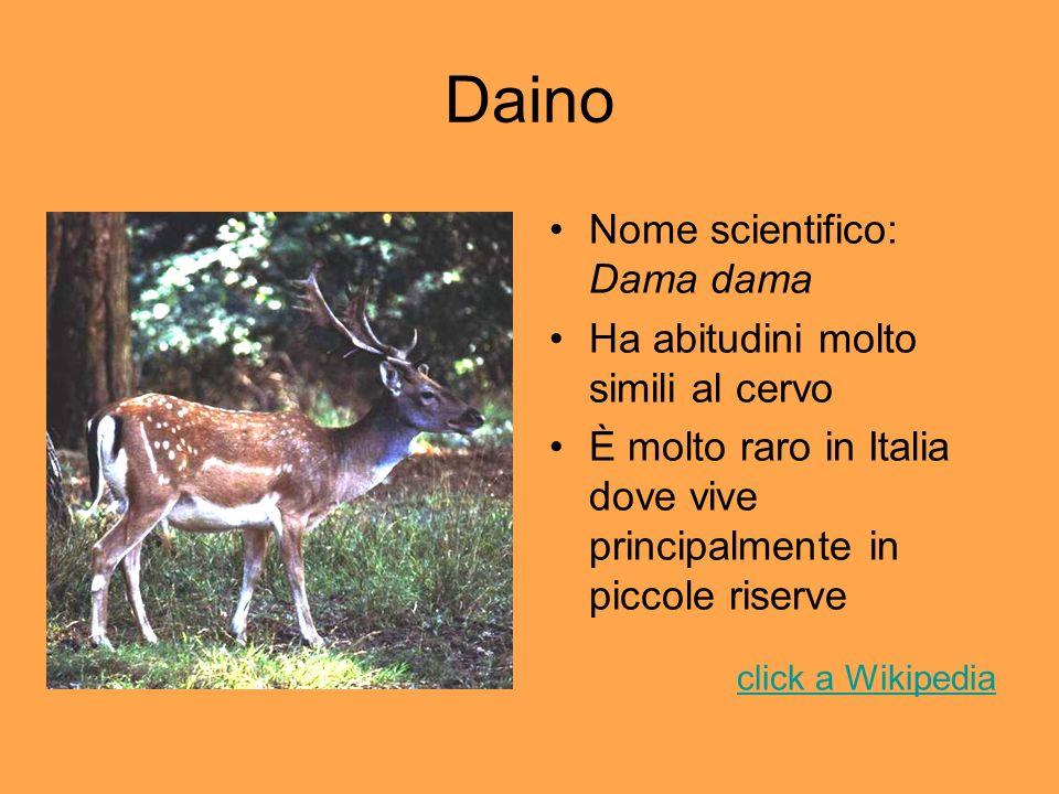 Daino Nome scientifico: Dama dama Ha abitudini molto simili al cervo È molto raro in Italia dove vive principalmente in piccole riserve click a Wikipe