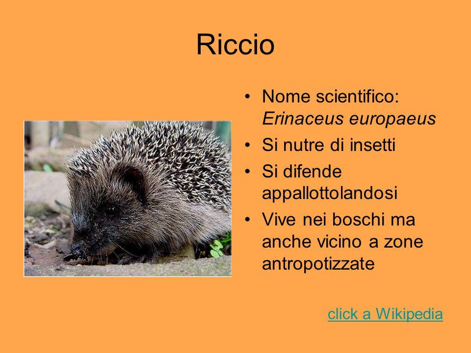 Riccio Nome scientifico: Erinaceus europaeus Si nutre di insetti Si difende appallottolandosi Vive nei boschi ma anche vicino a zone antropotizzate cl