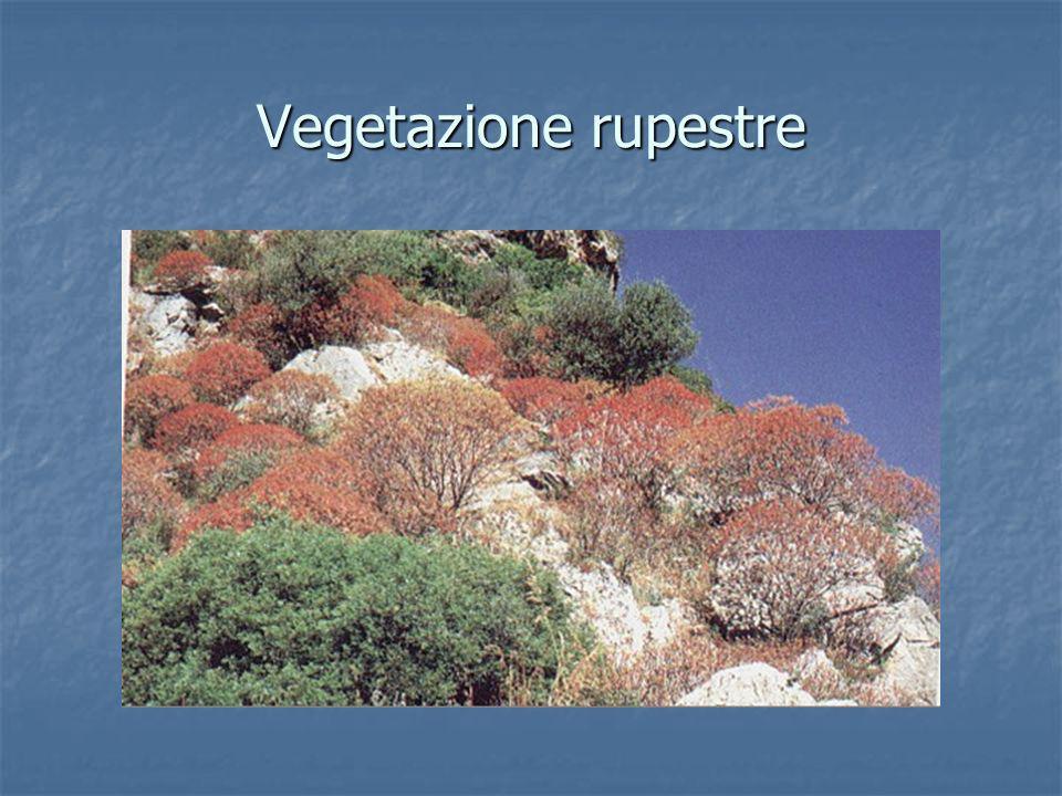 Vegetazione rupestre