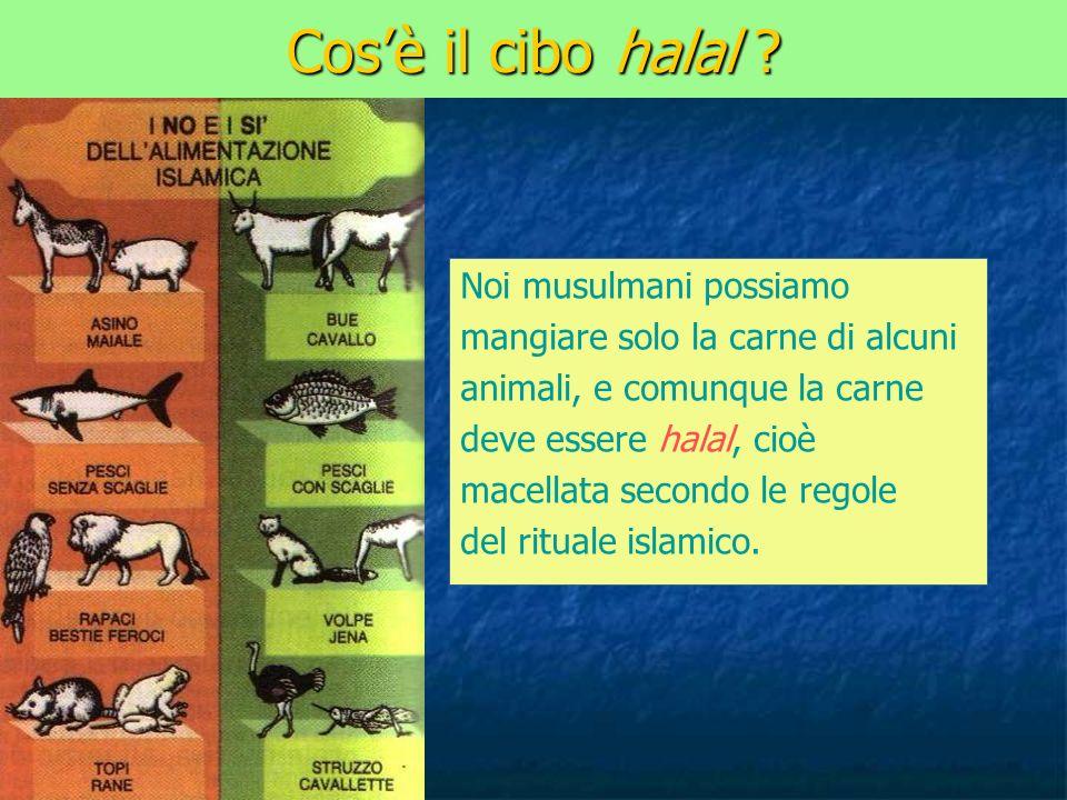 Cosè il cibo halal ? Noi musulmani possiamo mangiare solo la carne di alcuni animali, e comunque la carne deve essere halal, cioè macellata secondo le