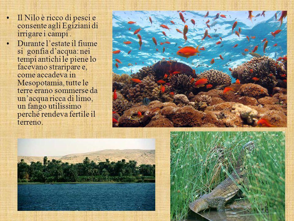 Il Nilo è ricco di pesci e consente agli Egiziani di irrigare i campi.