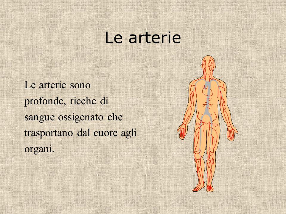 Le arterie Le arterie sono profonde, ricche di sangue ossigenato che trasportano dal cuore agli organi.