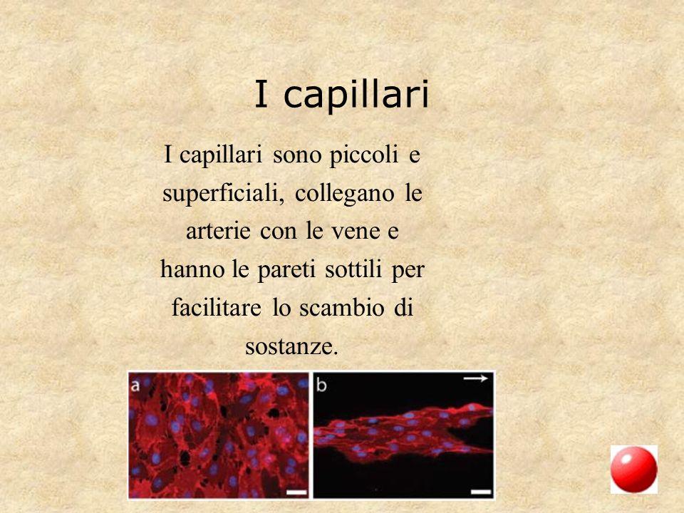 I capillari I capillari sono piccoli e superficiali, collegano le arterie con le vene e hanno le pareti sottili per facilitare lo scambio di sostanze.
