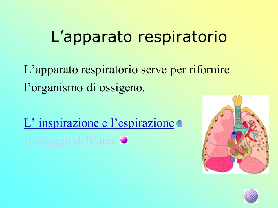 Lapparato respiratorio Lapparato respiratorio serve per rifornire lorganismo di ossigeno. L inspirazione e lespirazione Il viaggio dellaria