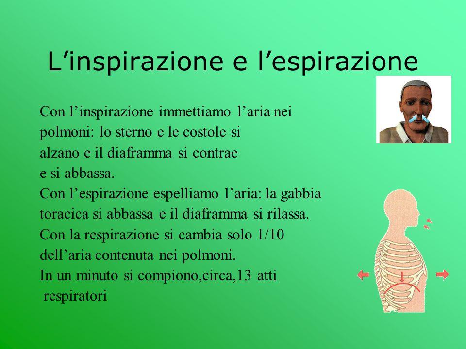 Linspirazione e lespirazione Con linspirazione immettiamo laria nei polmoni: lo sterno e le costole si alzano e il diaframma si contrae e si abbassa.