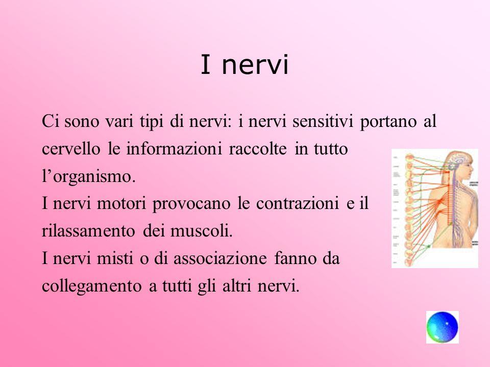 I nervi Ci sono vari tipi di nervi: i nervi sensitivi portano al cervello le informazioni raccolte in tutto lorganismo. I nervi motori provocano le co