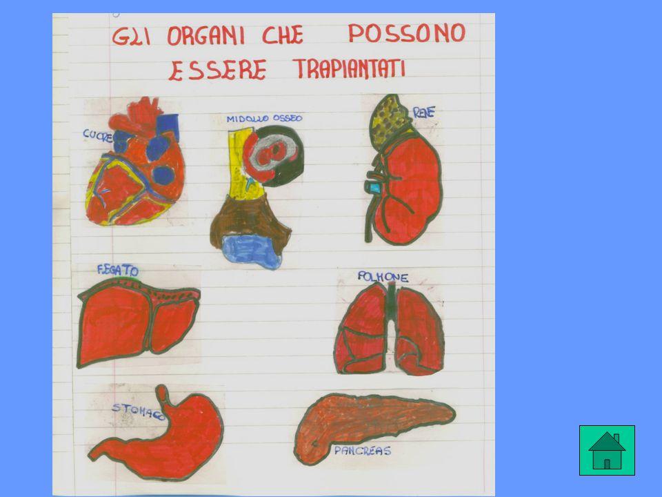NON TUTTI GLI ORGANI SI POSSONO CAMBIARE Attualmente sono molti gli organi e i tessuti che possono essere trapiantati, anche se alcuni interventi pres