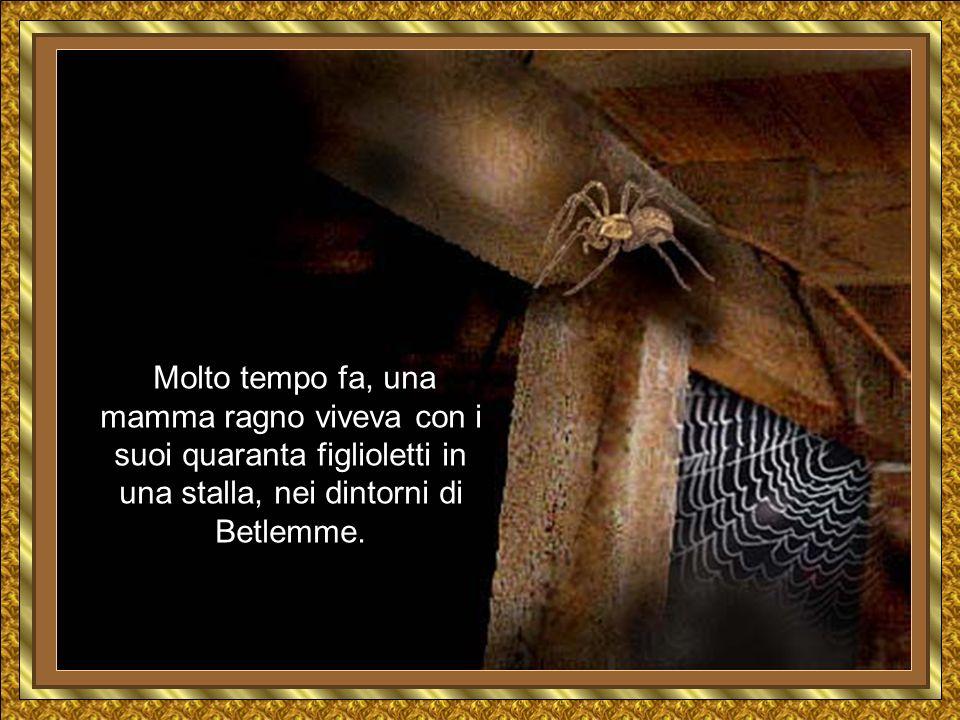 Molto tempo fa, una mamma ragno viveva con i suoi quaranta figlioletti in una stalla, nei dintorni di Betlemme.