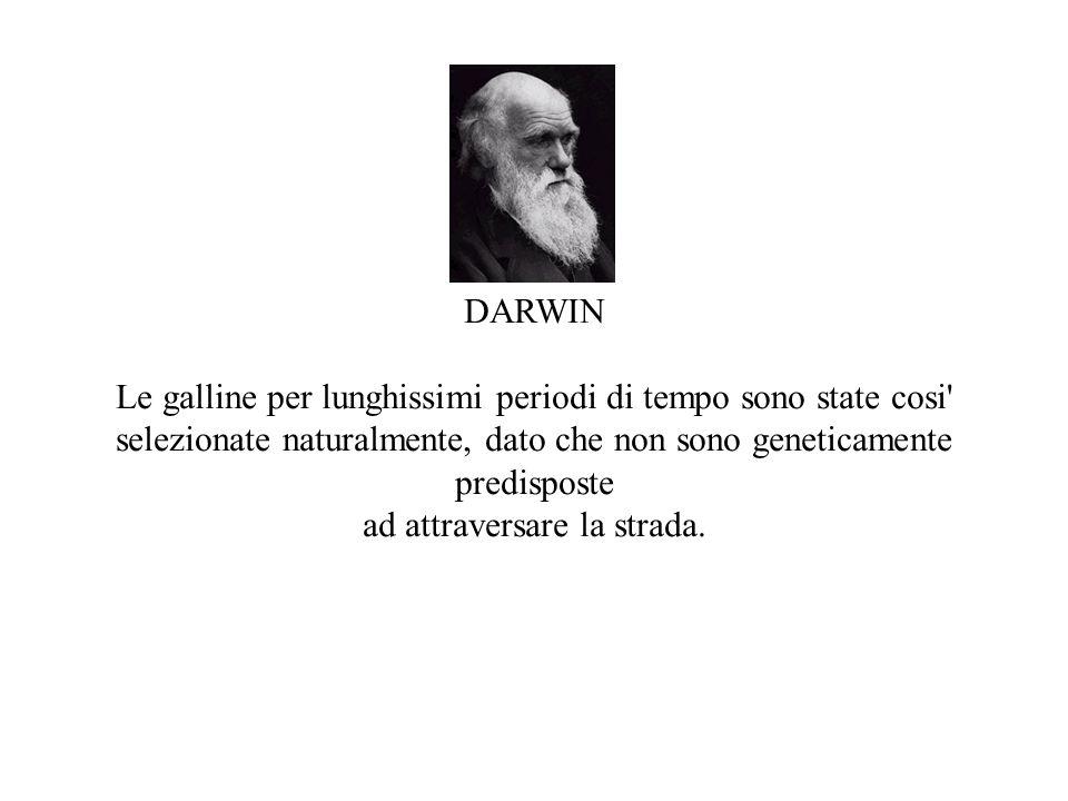 DARWIN Le galline per lunghissimi periodi di tempo sono state cosi selezionate naturalmente, dato che non sono geneticamente predisposte ad attraversare la strada.