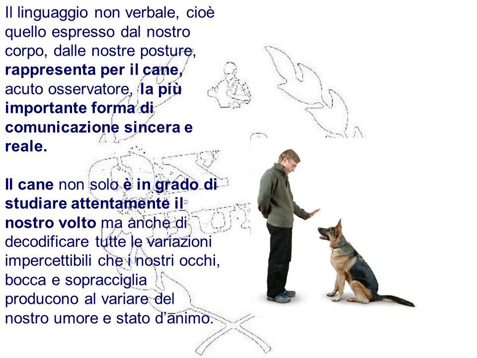 Il linguaggio non verbale, cioè quello espresso dal nostro corpo, dalle nostre posture, rappresenta per il cane, acuto osservatore, la più importante