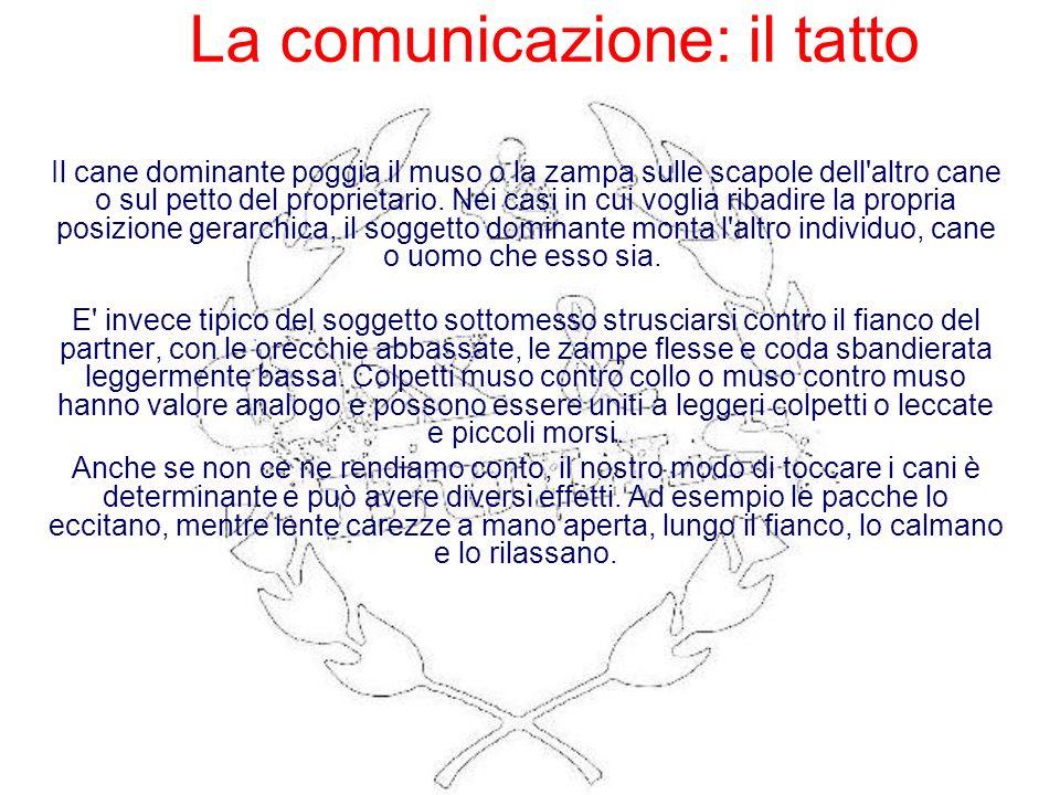 La comunicazione: il tatto Il cane dominante poggia il muso o la zampa sulle scapole dell'altro cane o sul petto del proprietario. Nei casi in cui vog