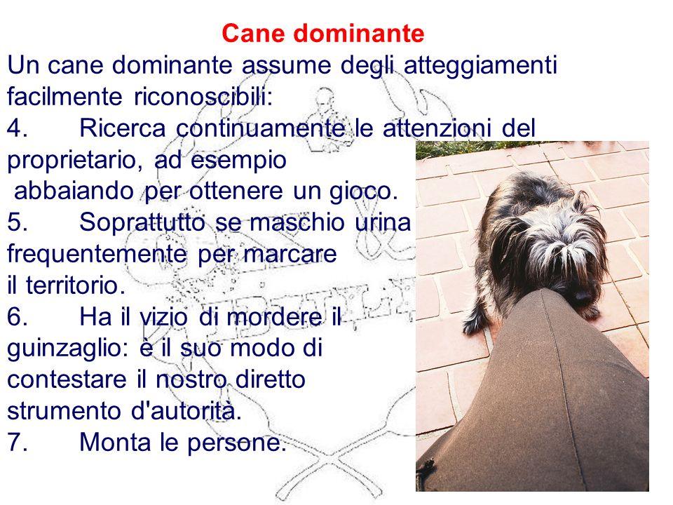 Cane dominante Un cane dominante assume degli atteggiamenti facilmente riconoscibili: 4. Ricerca continuamente le attenzioni del proprietario, ad esem