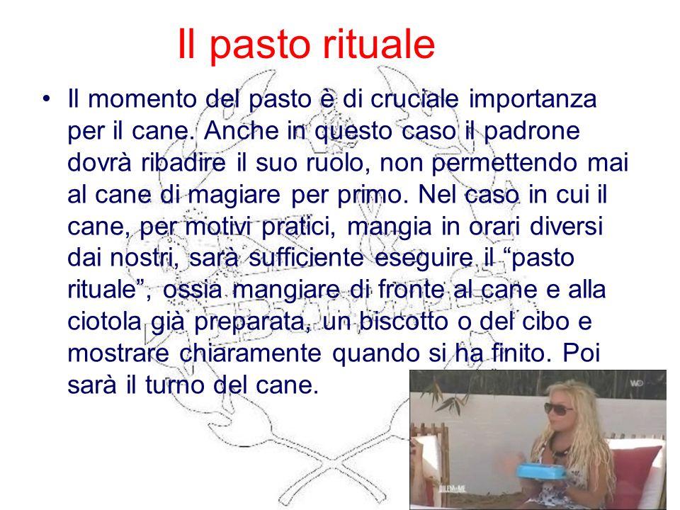Il pasto rituale Il momento del pasto è di cruciale importanza per il cane. Anche in questo caso il padrone dovrà ribadire il suo ruolo, non permetten