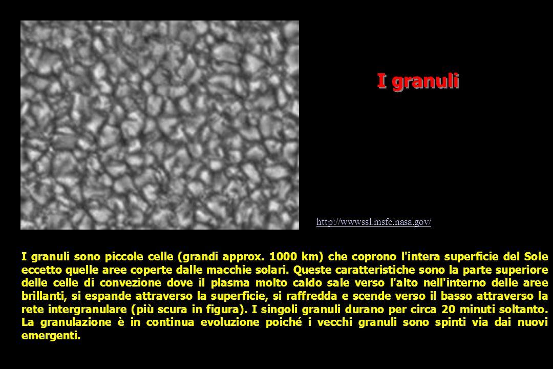 I granuli I granuli sono piccole celle (grandi approx.