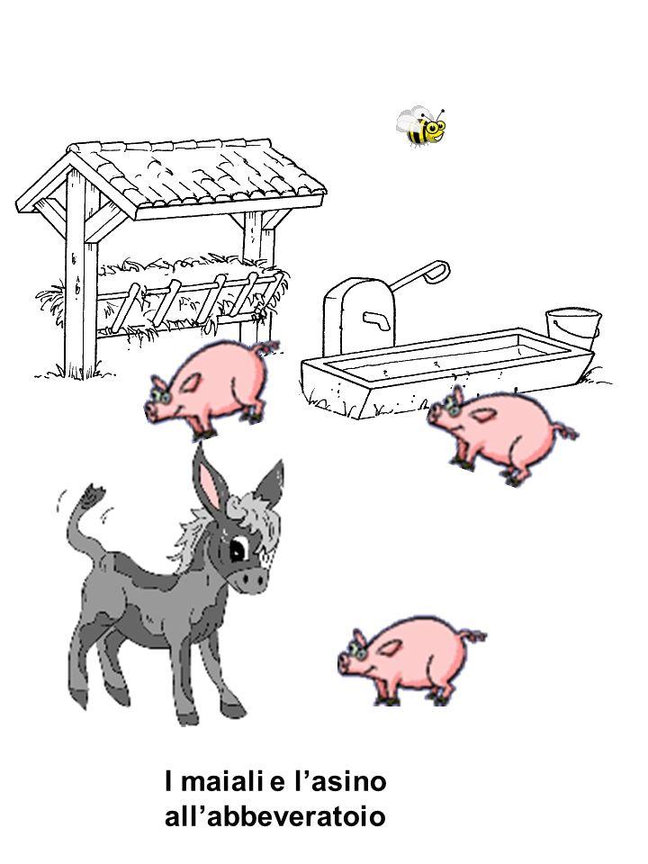 I maiali e lasino allabbeveratoio