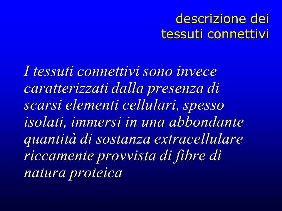 descrizione dei tessuti connettivi I tessuti connettivi sono invece caratterizzati dalla presenza di scarsi elementi cellulari, spesso isolati, immers