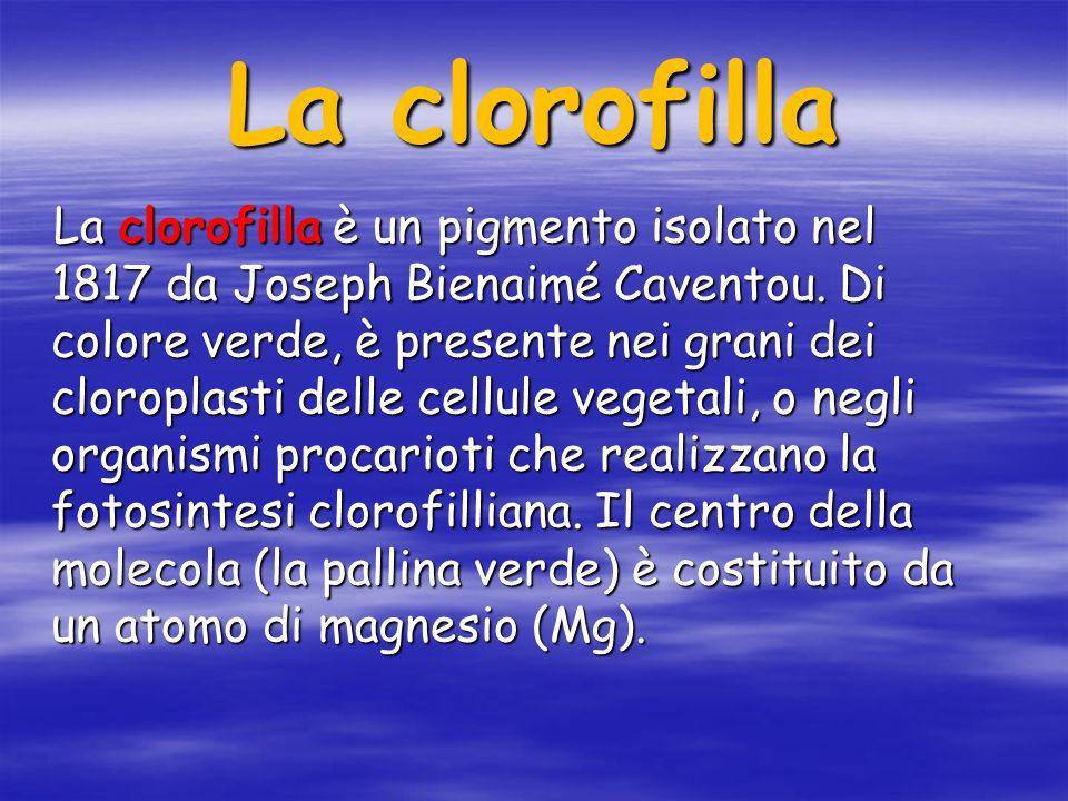La clorofilla La clorofilla è un pigmento isolato nel 1817 da Joseph Bienaimé Caventou.