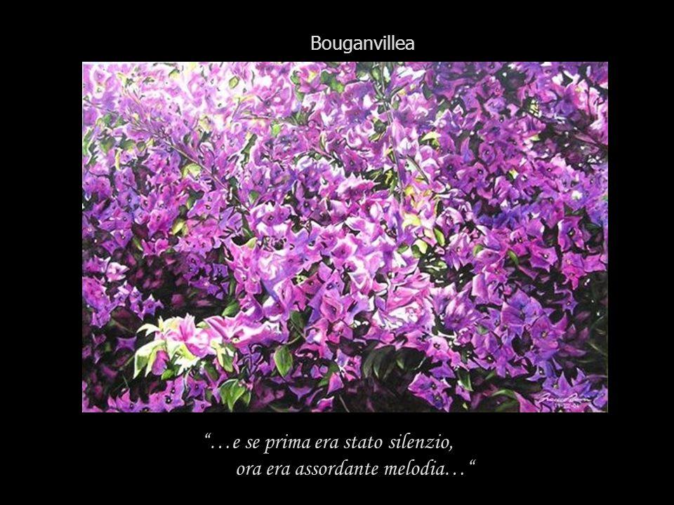 Bouganvillea …e se prima era stato silenzio, ora era assordante melodia…