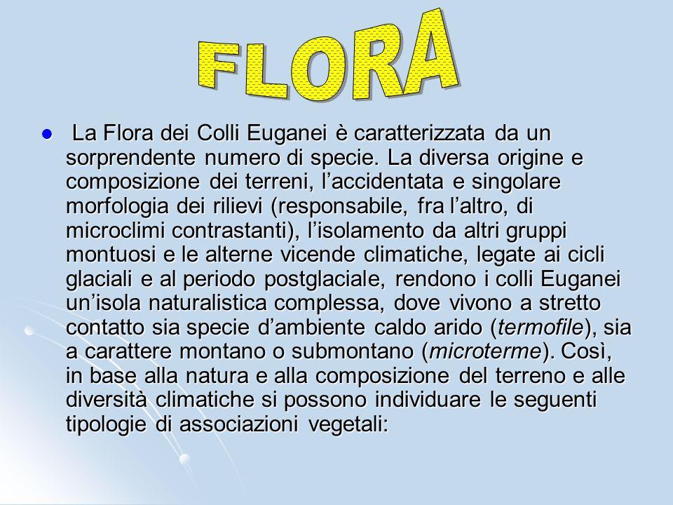 La Flora dei Colli Euganei è caratterizzata da un sorprendente numero di specie.