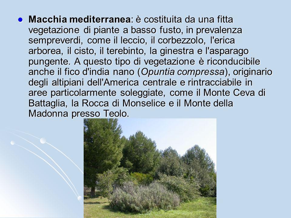 La Flora dei Colli Euganei è caratterizzata da un sorprendente numero di specie. La diversa origine e composizione dei terreni, laccidentata e singola