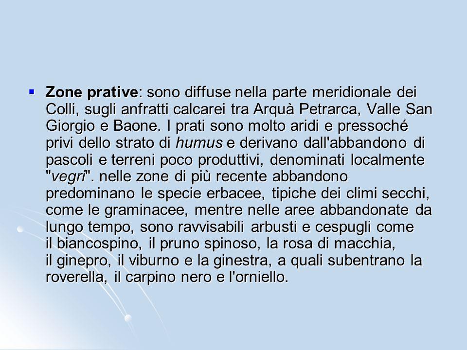 Macchia mediterranea: è costituita da una fitta vegetazione di piante a basso fusto, in prevalenza sempreverdi, come il leccio, il corbezzolo, l'erica