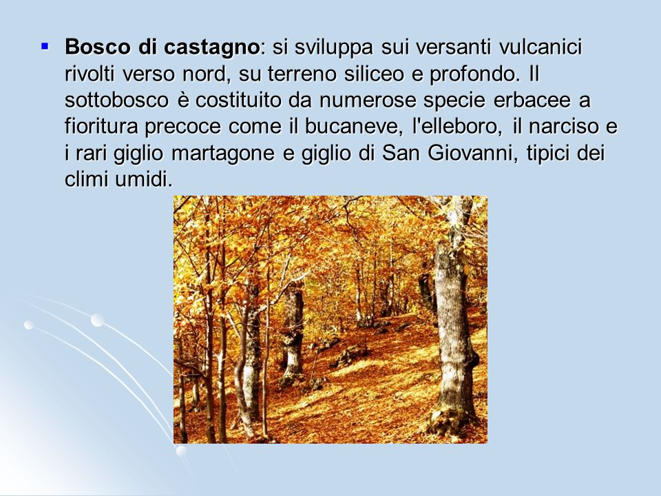 Bosco di castagno: si sviluppa sui versanti vulcanici rivolti verso nord, su terreno siliceo e profondo.
