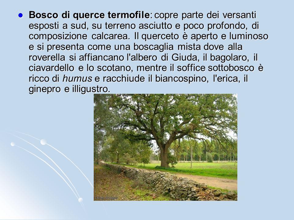 Bosco di castagno: si sviluppa sui versanti vulcanici rivolti verso nord, su terreno siliceo e profondo. Il sottobosco è costituito da numerose specie