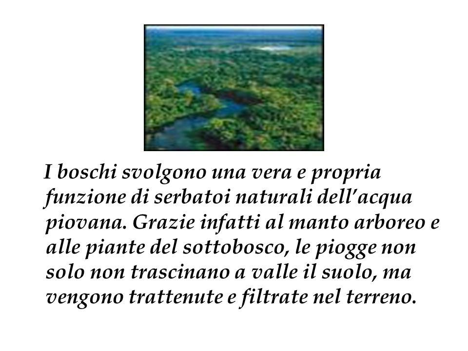 I boschi svolgono una vera e propria funzione di serbatoi naturali dellacqua piovana. Grazie infatti al manto arboreo e alle piante del sottobosco, le