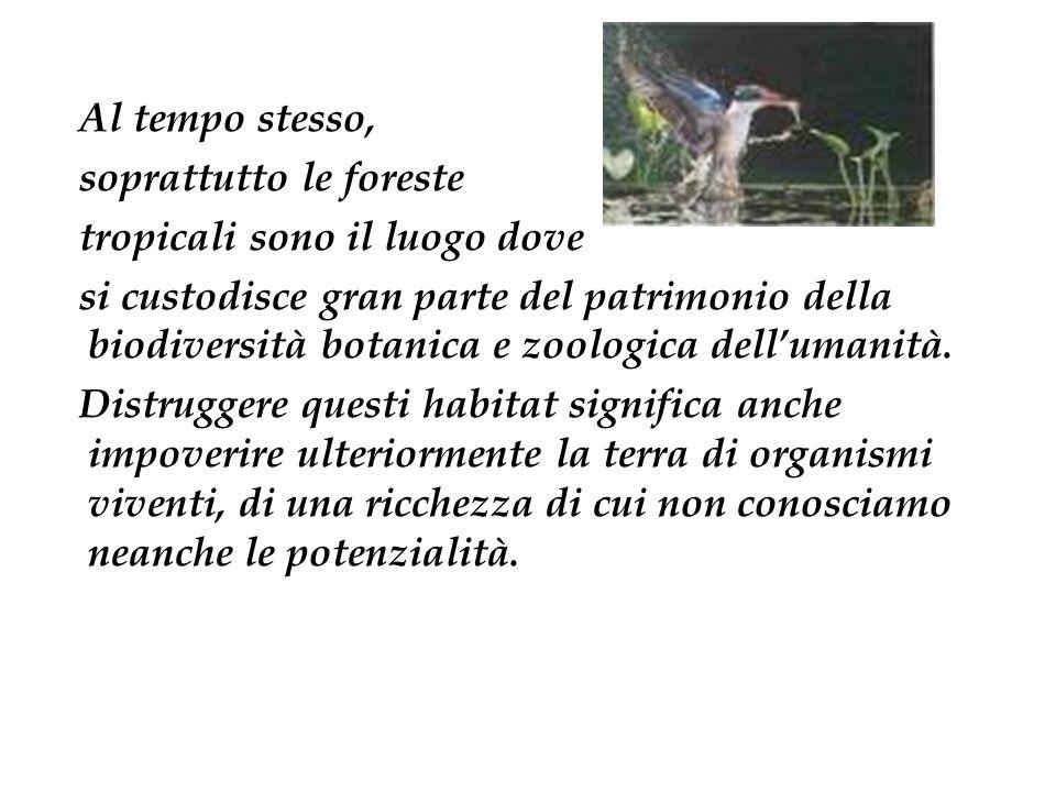 Al tempo stesso, soprattutto le foreste tropicali sono il luogo dove si custodisce gran parte del patrimonio della biodiversità botanica e zoologica d
