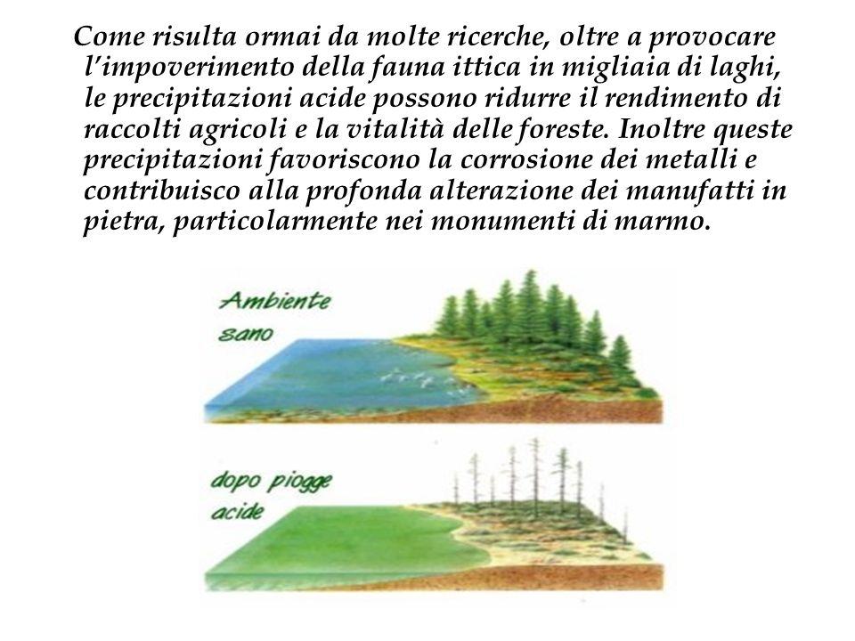 La stessa riduzioni delle loro superfici ha effetti negativi non solo a livello locale ma sulla salute complessiva del pianeta.