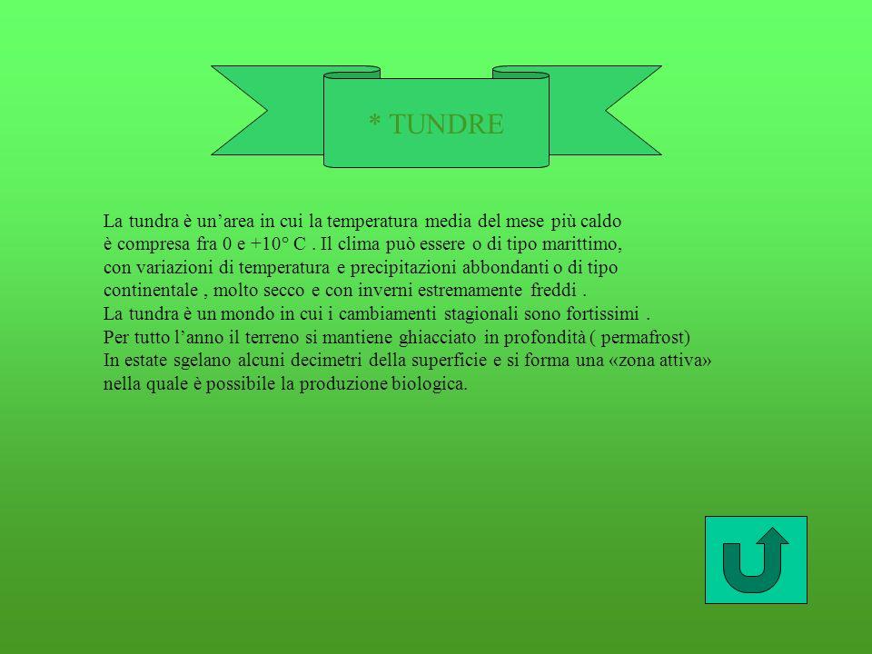 * TUNDRE La tundra è unarea in cui la temperatura media del mese più caldo è compresa fra 0 e +10° C.