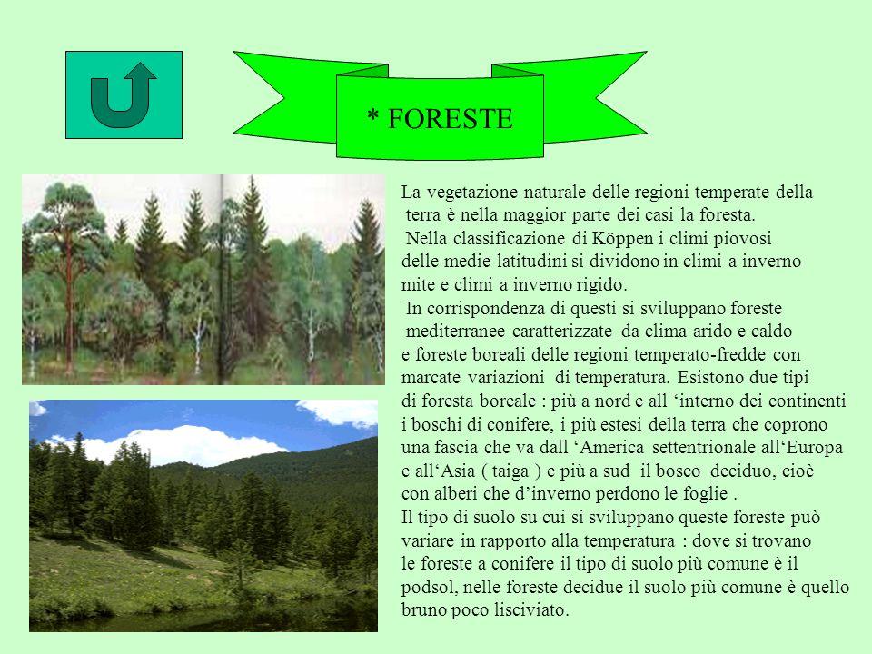 * FORESTE La vegetazione naturale delle regioni temperate della terra è nella maggior parte dei casi la foresta.